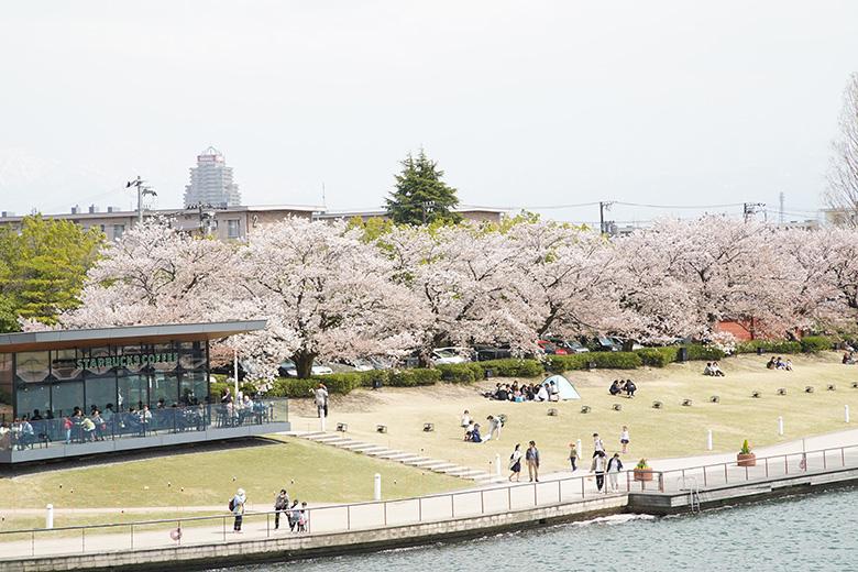 環水公園の桜とスターバックスコーヒー