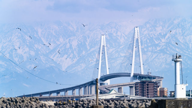 新湊大橋の写真