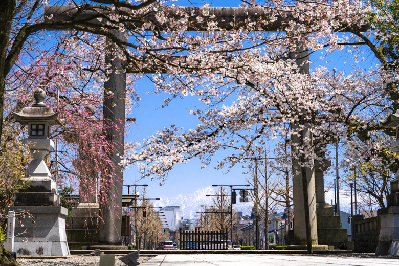 富山県護国神社の桜と剱岳