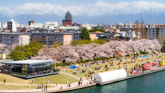 環水公園の桜と立山連峰