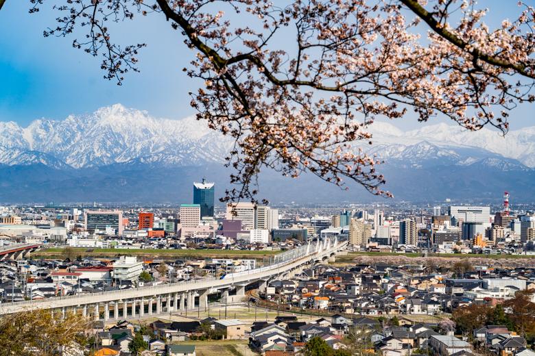 呉羽山公園展望台の桜と北陸新幹線