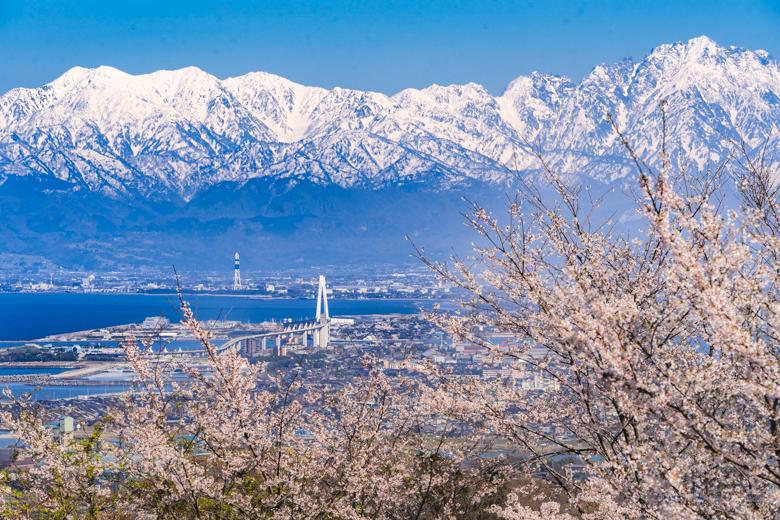 二上山の桜越しに見た富山湾と立山連峰