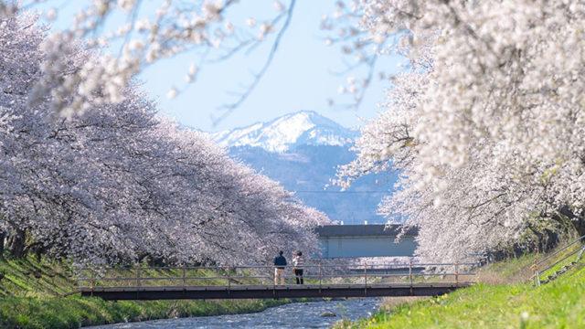 #春の四重奏2019 Instagramフォトコンテスト 入選作品