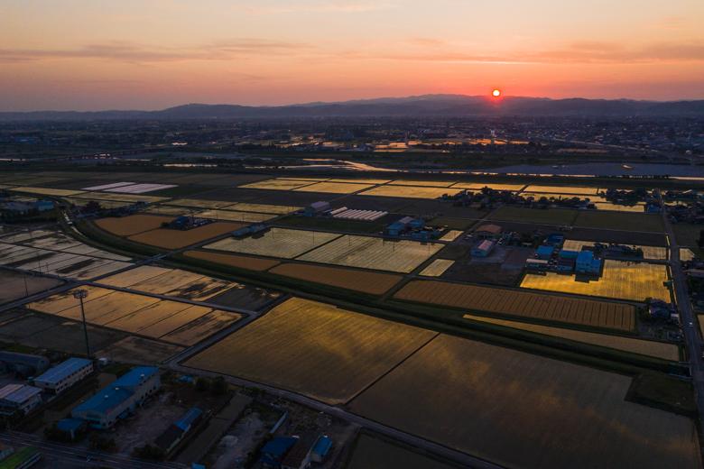 ドローンで撮影した田んぼに映った夕焼け。